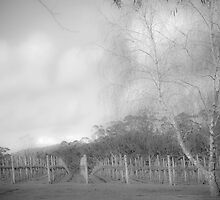 Winter Vineyard 2 in Mono by pennyswork