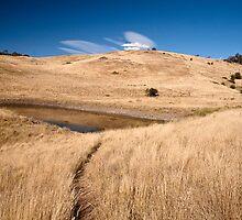Pasture land by Alex Howen