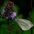 Butter - Fly ....................... by snapdecisions