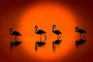 Flamingos at Sunset, Nakuru National Park, Kenya. Africa. by photosecosse /barbara jones