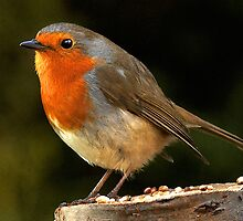 Robin on Log by Norfolkimages