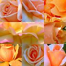 Just Joey Rose Collage by Antionette