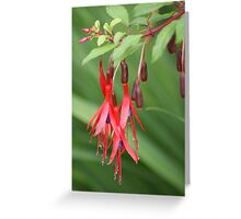 Fuschia ~ Buds, Flowers, and Berries On One Stem! Greeting Card