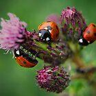 3ree Times A Ladybird by Yhun Suarez