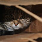 got the cat in the bag by kurtmansfield
