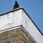 birds view by kurtmansfield