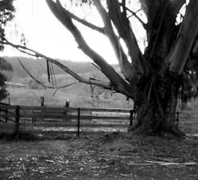 Old gum tree 2 - Dykes Bridge  by Malcolm Garth