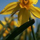 Arrival of Spring by PetraJW