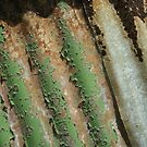 Weathered corrugations by Trevor Hadley