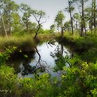 Florida Reflections by WiredMarys