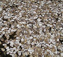 Oyster Shell Carpet by pocketdelight