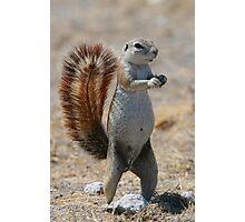 Got Nuts? - Cape Ground Squirrel Photographic Print
