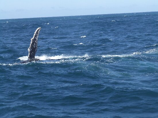 Whale of time! by Kaylene Passmore