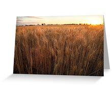 Golden Flakes of Wheat, Victoria, Australia Greeting Card