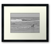 A Dog And His Log Framed Print