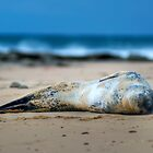 Leopard Seal - Smile When Your Dreamin! by clydeessex
