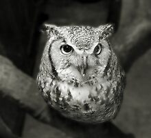 OWL by Gail Falcon