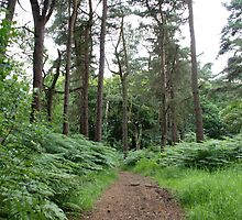 Woodland path - Mixenden, Halifax, UK by Andy Beattie