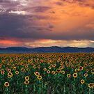 God&#x27;s Sunflower Sky by John  De Bord Photography