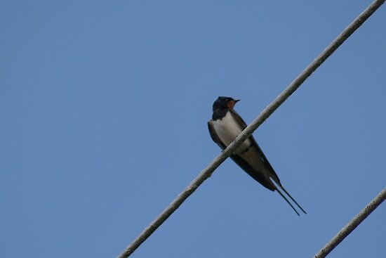 bird on a wire by vonniepyn