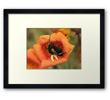 Climbing Out Framed Print