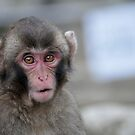 """Mr Monkey: Name a fruit beginning with """"B"""" by gottheshot"""