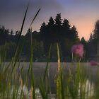 summer wind by gabryshak
