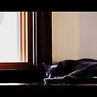 Cat Nap by Carrie Bonham