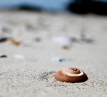 Sandy Snail Shells by UrbanPortraits