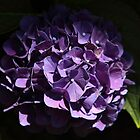 PURPLE HYDRANGEA  by Gail Falcon