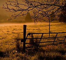 Golden Glow by Patricia Montgomery