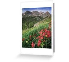 Summer Paint Brush - Indian Peaks Wilderness Greeting Card