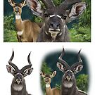 MOUNTAIN NYALA Tragelaphus buxtoni: REWORKING ( NOT A PHOTOGRAPH) PLEASE READ BLURB by DilettantO