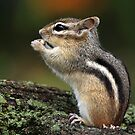 In His Own World / Chipmunk  by Gary Fairhead