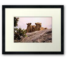 Lions Den Framed Print