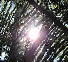 Sunshine through the pine needles by FrogGirl