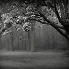 Cloaked in Fog, the Forest Waits by kelleygirl