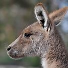 Portrait of a Wallaby by Christopher Clarke