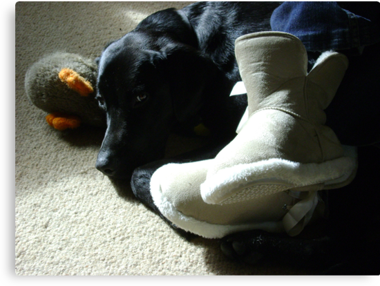 Domestic Bliss (dog at mistress' feet with toy)  by armadillozenith