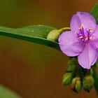 Wildflower by Joe Elliott