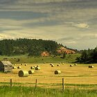 Black Hills Hay Field by Nate Welk