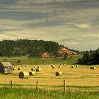 Black Hills Hay Field by Nate Welk