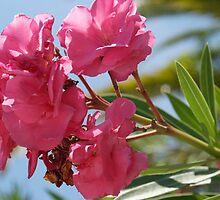 pink oleander by Mark de Jong