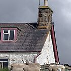 N-ewe Neighbours - Sheep Move into the House by simpsonvisuals