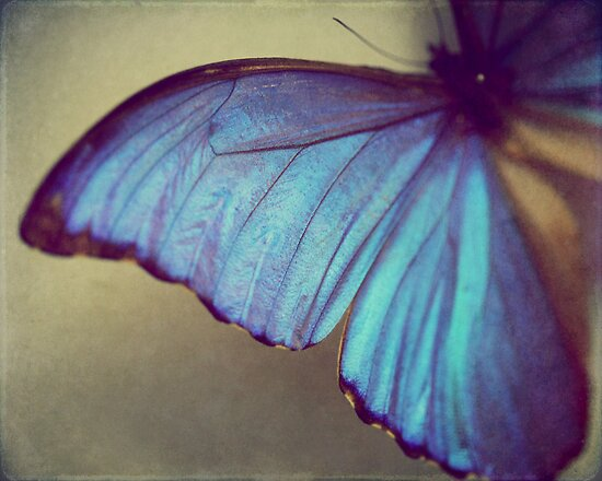 Blue Wing by ameliakayphotog