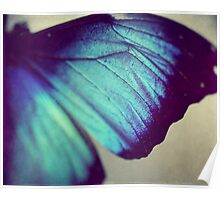 Black and Blue Wing Poster