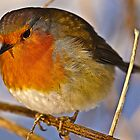 Fluffed Up Robin Macro by Gareth Jones