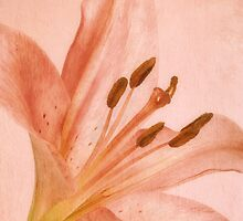 Pink Lily * Wall Art by AnaCBStudio