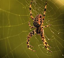 Along Came A Spider by kenmo