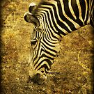 Golden Zebra  by Saija  Lehtonen